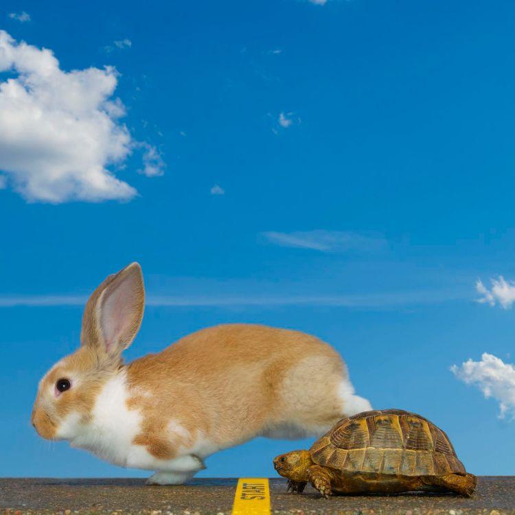 Denna bild har ett alt-attribut som är tomt. Dess filnamn är tortois-hare-mars-in-taurus-.jpg
